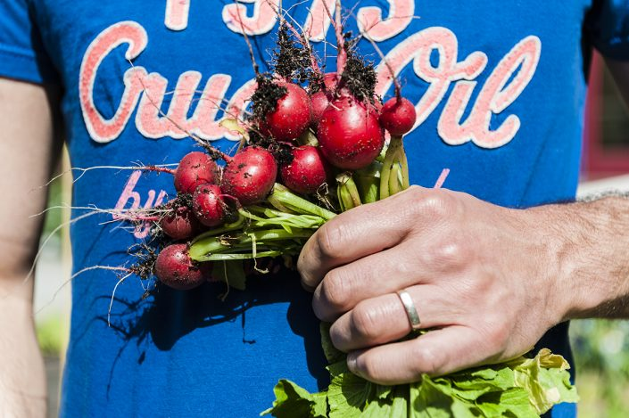 handful of fresh radishes