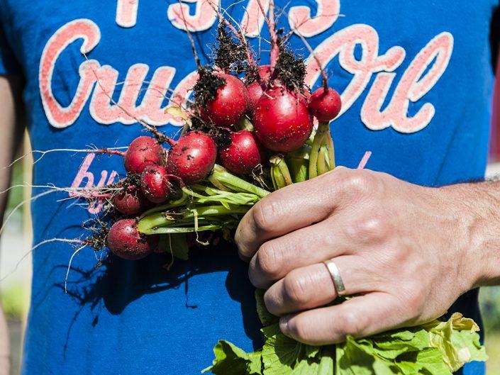 handful of fresh radishes