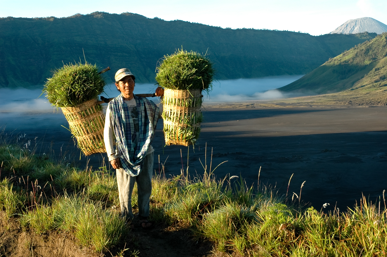 indonesia farmer carrying heavy load near bromo vulcano