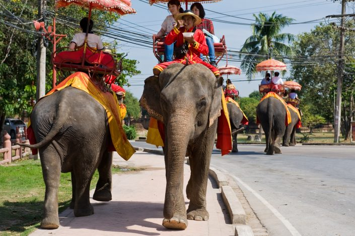 thailand ayutthaya tourists taking an elephant taxi