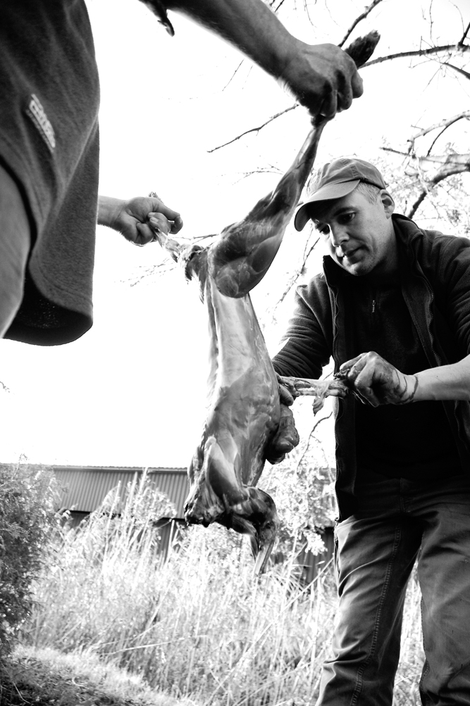 skinning a hare