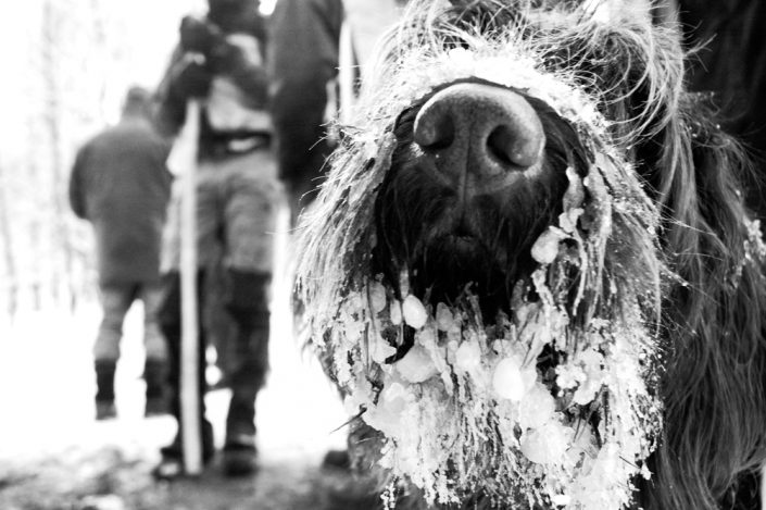 hunting with dogs snowbeard