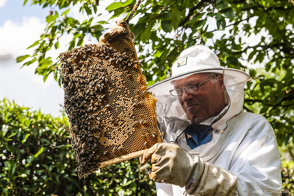 beekeeper inspecting the honeycomb
