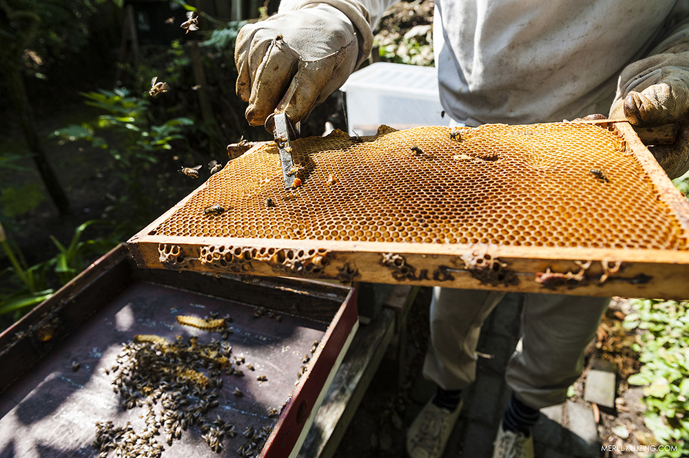 beekeeper shows the pollen on the honeycomb